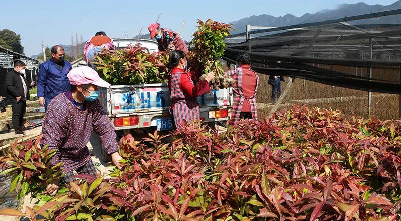 国家林草局:做好种苗生产供应 有序推进国土绿化