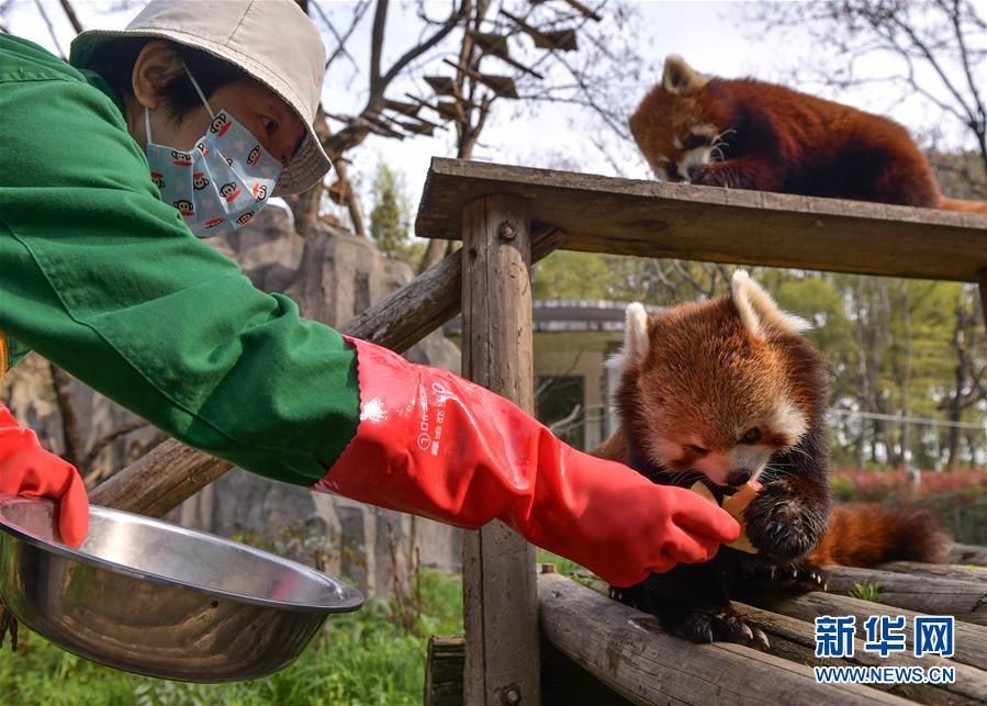 武汉:看护动物家乡