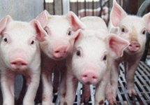 下半年百姓碗里的猪肉有保障吗?——农业农村部有关负责人谈生猪生产热点问题