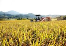 """世界濒临严重粮食危机 中国老百姓的""""米袋子""""会受影响吗"""