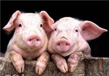 养殖企业:肉价跌破养殖成本线不可能持续