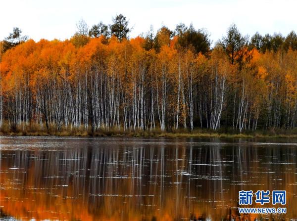 http://www.edaojz.cn/yuleshishang/797090.html