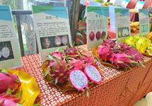 """小众产业里的""""致富经"""":热带作物如何走上消费者餐桌"""