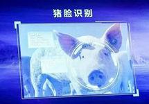 养殖业迎来转型升级突破口 AI养猪绝不是大材小用