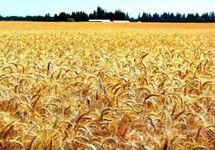 粮食生产形势如何?如何看待粮价上涨?农业农村部回应