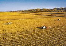 今年我国粮食丰收已成定局 预计全年粮食产量将超1.3万亿斤