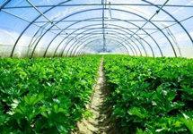 北京多年来首次下达粮食、蔬菜生产年度目标