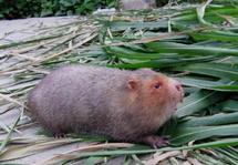 国家林草局:积极引导今年底前停止养殖竹鼠等45种禁食野生动物