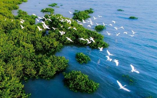 ▲北海金海湾红树林生态保护区,飞鸟成群。受访者供图