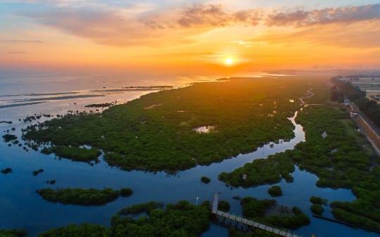 ▲广西北海滨海国家湿地公园内,红树林延绵4.5公里长。受访者供图