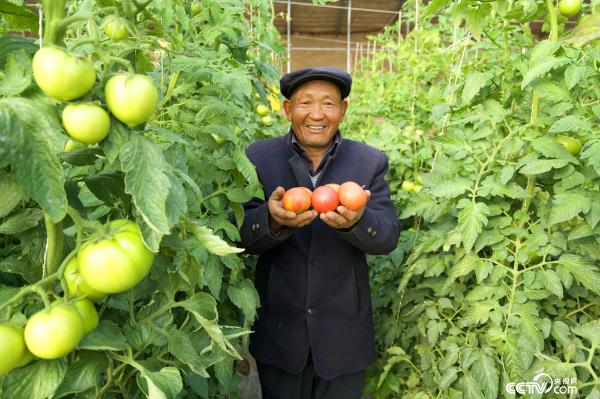 甘肃省武威市古浪县富民新村村民李应川从深山搬下来,种起了蔬菜大棚。