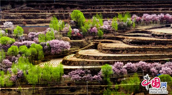 宁夏固原:春日自驾路线丰富 最美风景总在路上