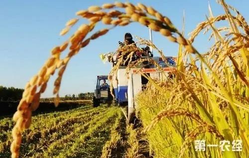 中国农业展望报告:未来10年 我国粮食供应保障更加有力