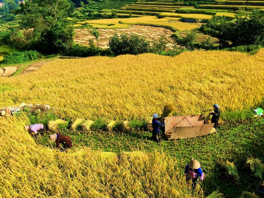 现代可持续农业-食物系统的认知和实践演变