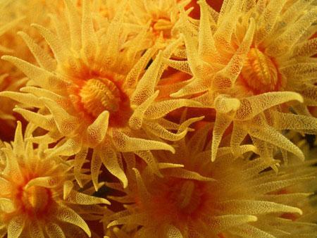صور من اعماق البحر صور من اعماق البحر خيال