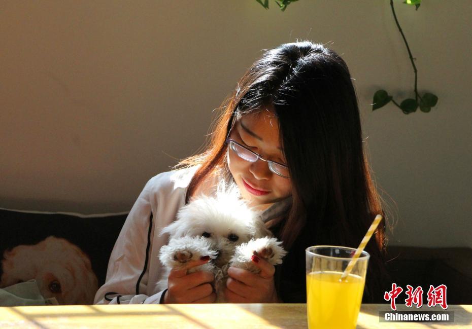 Кафе с домашними животными помогает городским жителям в борьбе со стрессом