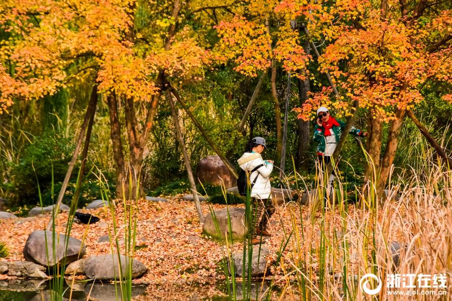 Живописные пейзажи в парке города Тайжчоу