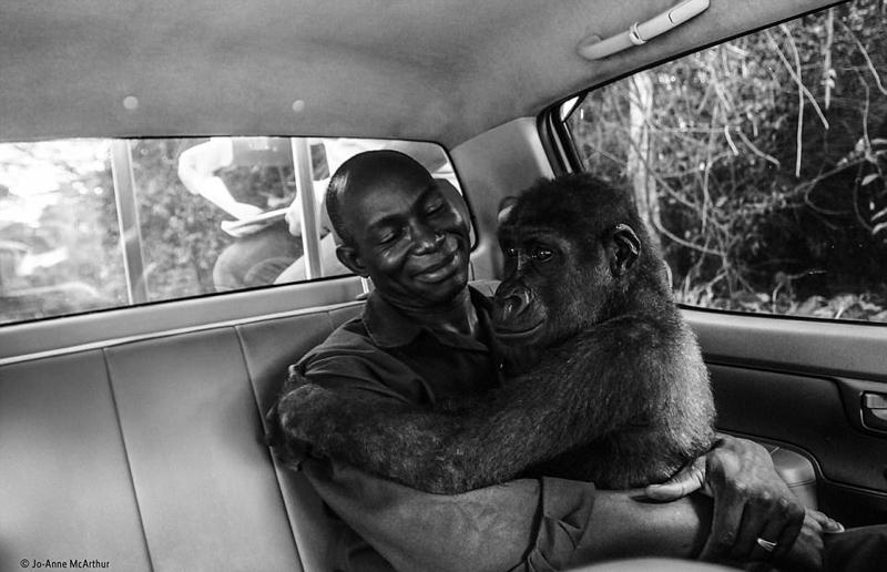Произведения, участвовавшие в конкурсе фотографий диких животных-2017