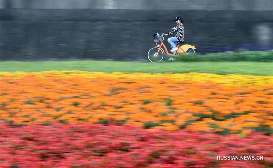 Пестрые цветочные ковры в парках Тайбэя