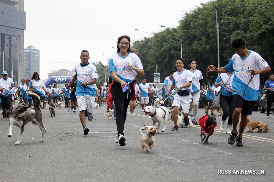 Собаки-спортсмены по всему миру