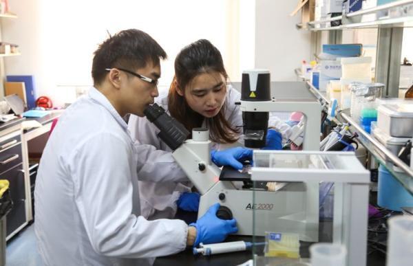 Китайские ученые составили первый в мире клеточный атлас млекопитающих