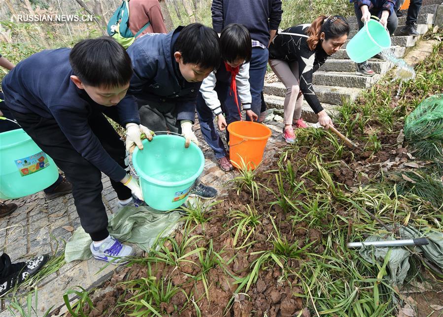 Жители Нанкина восстановили зеленые насаждения вдоль лестницы на гору Цзыцзиньшань