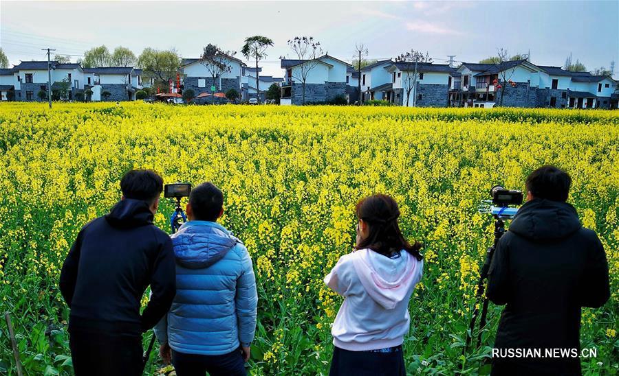 Цветущие поля как основа цветущей экономики в провинции Сычуань