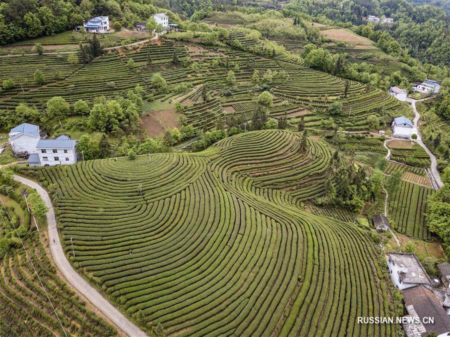 Красоты чайных плантаций уезда Уфэн