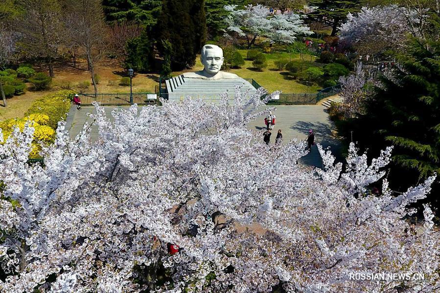 Цветущий парк Чжуншань в Циндао