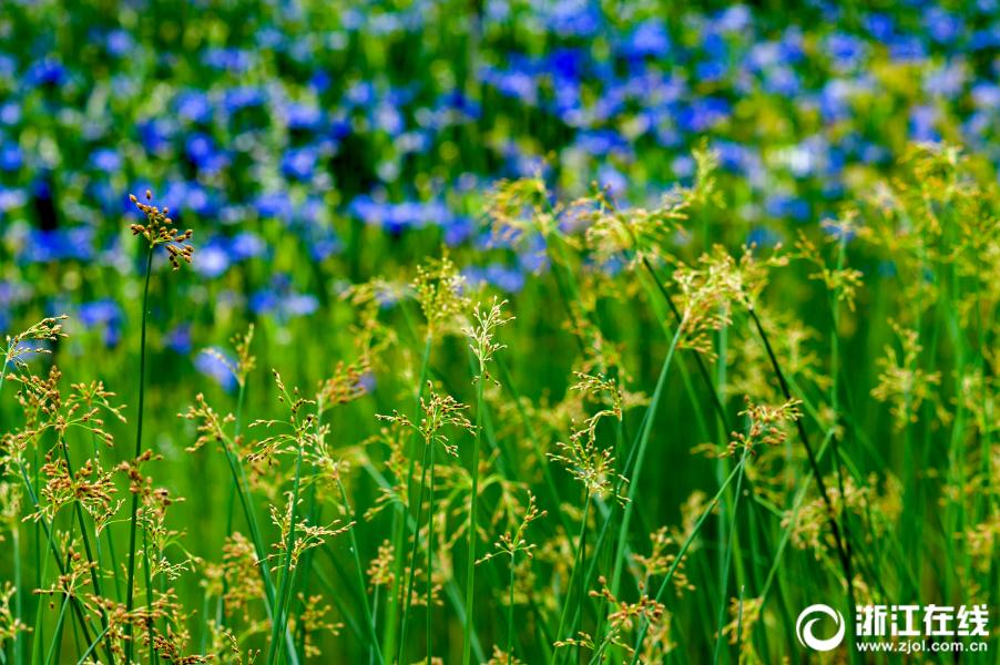 Очаровательные пейзажи ботанического сада в районе Чжэньхай (г. Нинбо, пров. Чжэцзян)