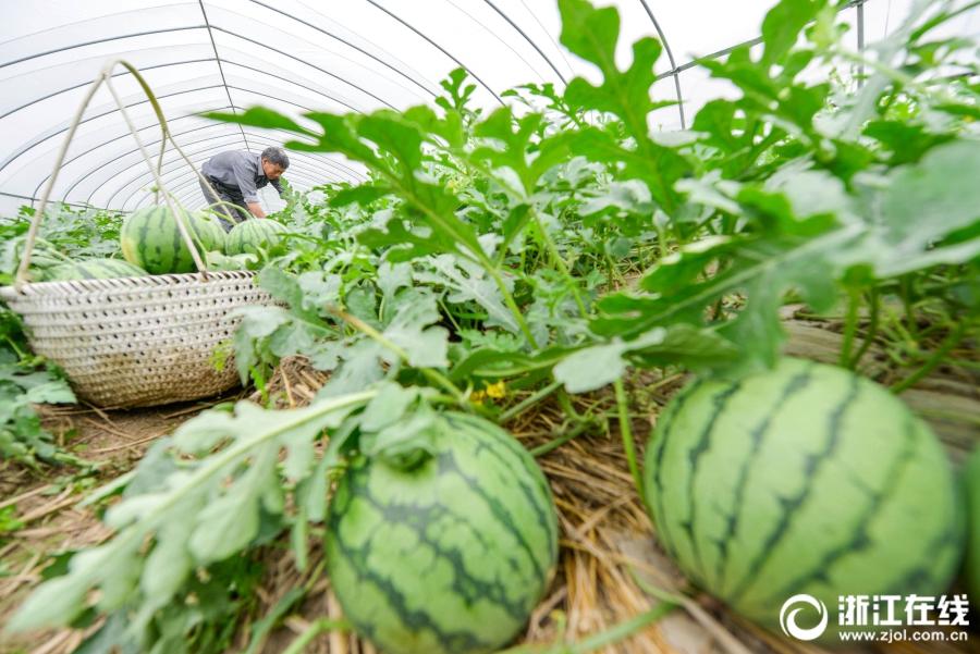 Бизнес план выращивание арбузов 94