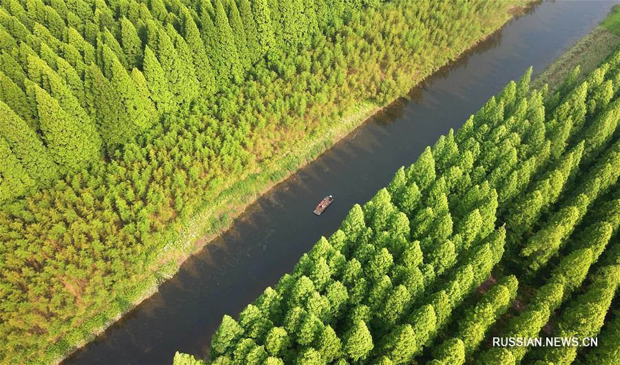 """На фото -- яркое зеленое убранство национального лесного парка """"Хуанхай"""" в городском уезде Дунтай провинции Цзянсу /Восточный Китай/."""