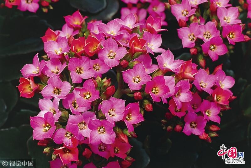 Топ-4 самых красивых домашних растений, за которыми легко ухаживать
