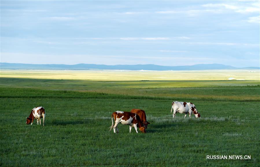 Лето в степях АР Внутренняя Монголия