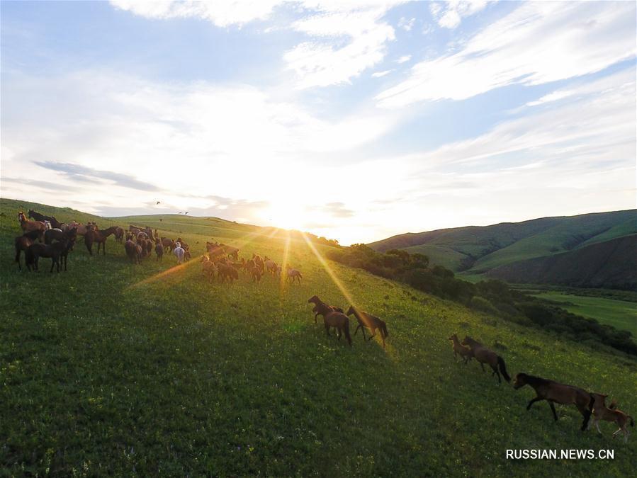 Прекрасные пейзажи степей Внутренней Монголии