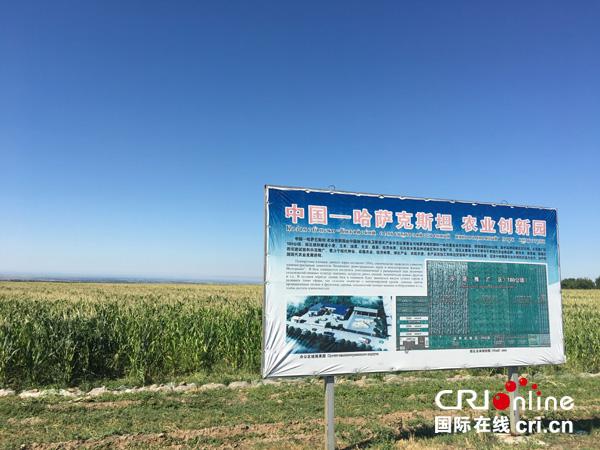 【Пять лет с момента выдвижения «Одного пояса, одного пути»】Сельскохозяйственное сотрудничество между Китаем и Казахстаном на полях «надежды»