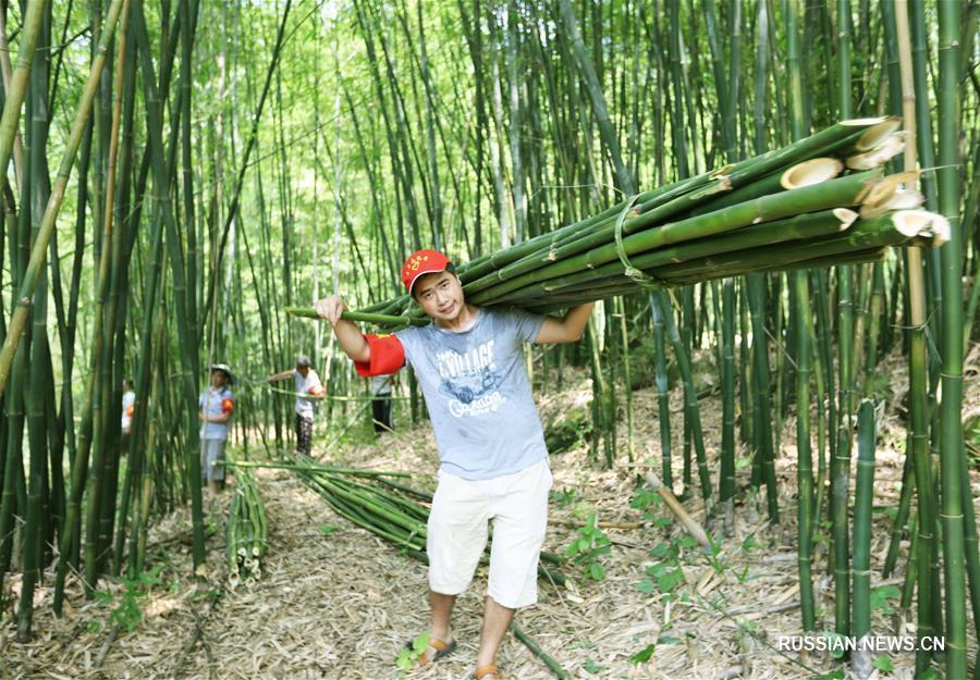 Бамбук обогащает жителей городского округа Чишуй провинции Гуйчжоу