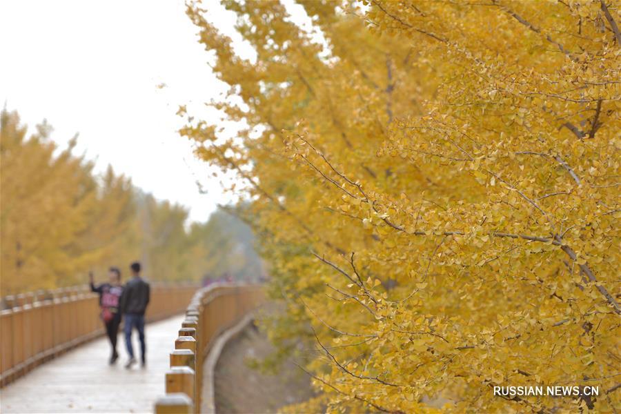 """Шахэ, 8 ноября /Синьхуа/ -- На снимке: осенний пейзаж в г. Шахэ пров. Хэбэй на севере Китая. 7 ноября в Китае начался сезон """"Становления зимы"""" /""""Лидун""""/ по традиционному китайскому сельскохозяйственному календарю."""