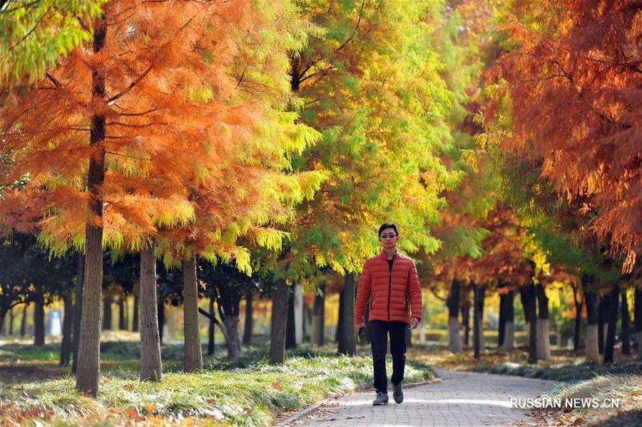 """Циндао, 8 ноября /Синьхуа/ -- На снимке: осенний пейзаж в г. Циндао пров. Шаньдун на востоке Китая. 7 ноября в Китае начался сезон """"Становления зимы"""" /""""Лидун""""/ по традиционному китайскому сельскохозяйственному календарю."""
