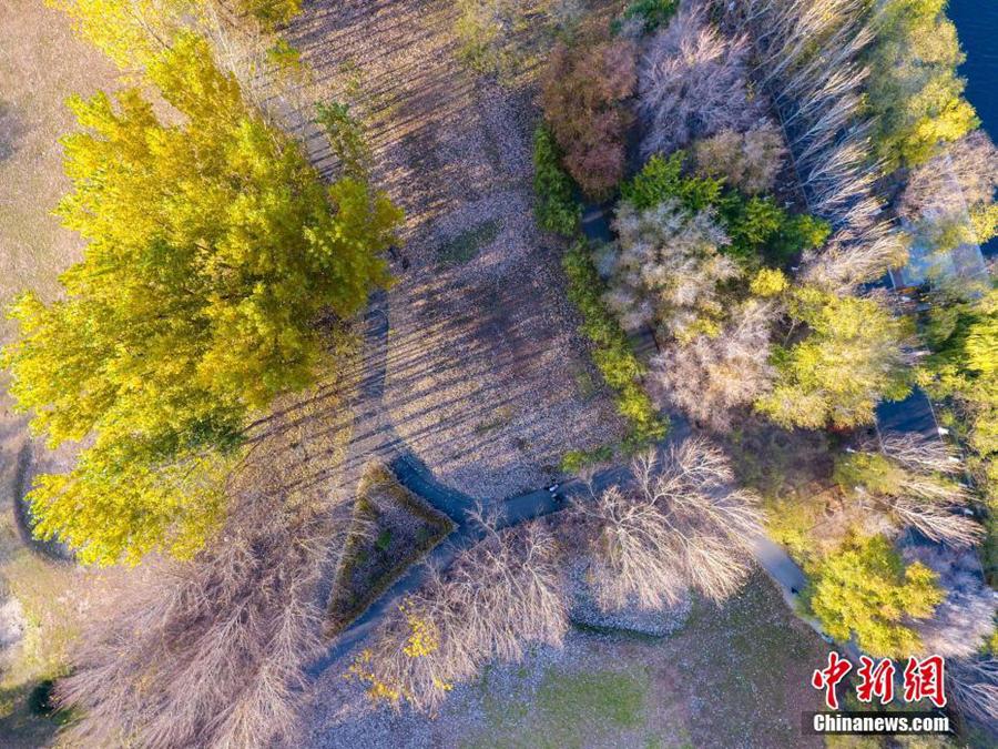 Очаровательные осенние пейзажи города Шэньян