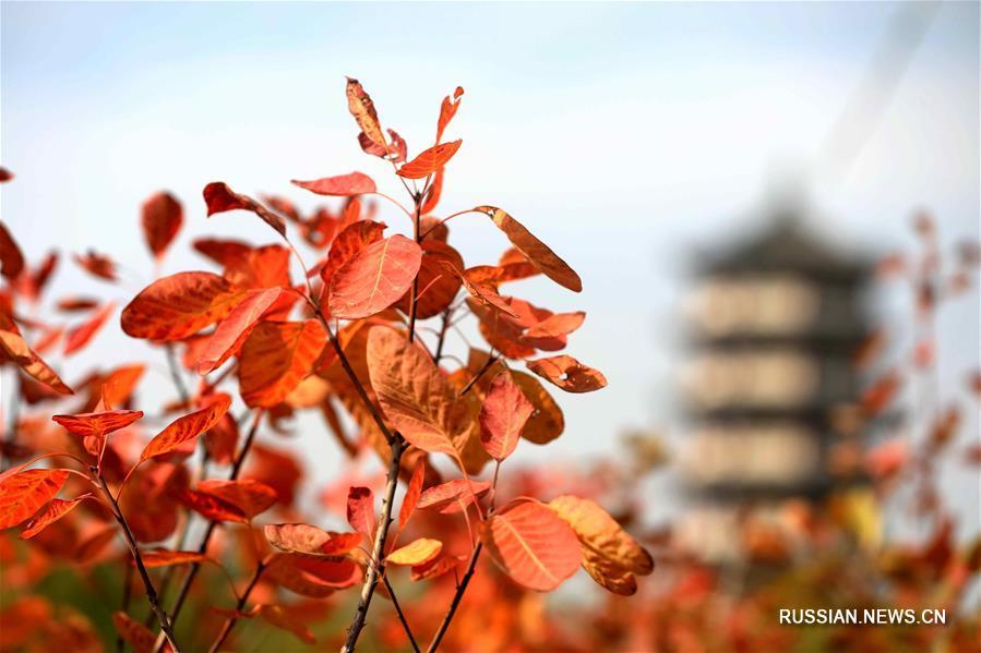"""Синтай, 8 ноября /Синьхуа/ -- На снимке: осенний пейзаж в уезде Жэньсянь пров. Хэбэй на севере Китая. 7 ноября в Китае начался сезон """"Становления зимы"""" /""""Лидун""""/ по традиционному китайскому сельскохозяйственному календарю."""