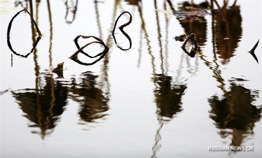 Зимняя мелодия увядающих лотосов