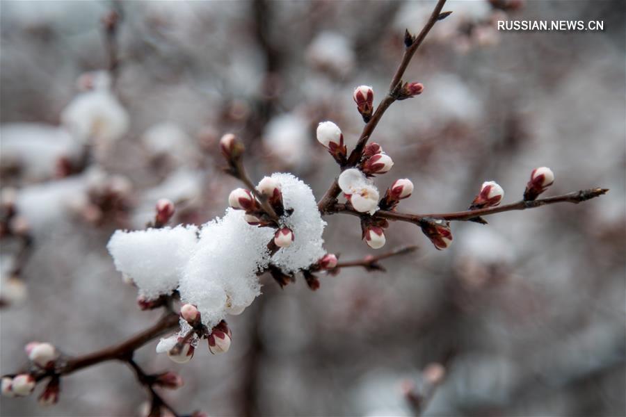 Пекин после апрельского снегопада