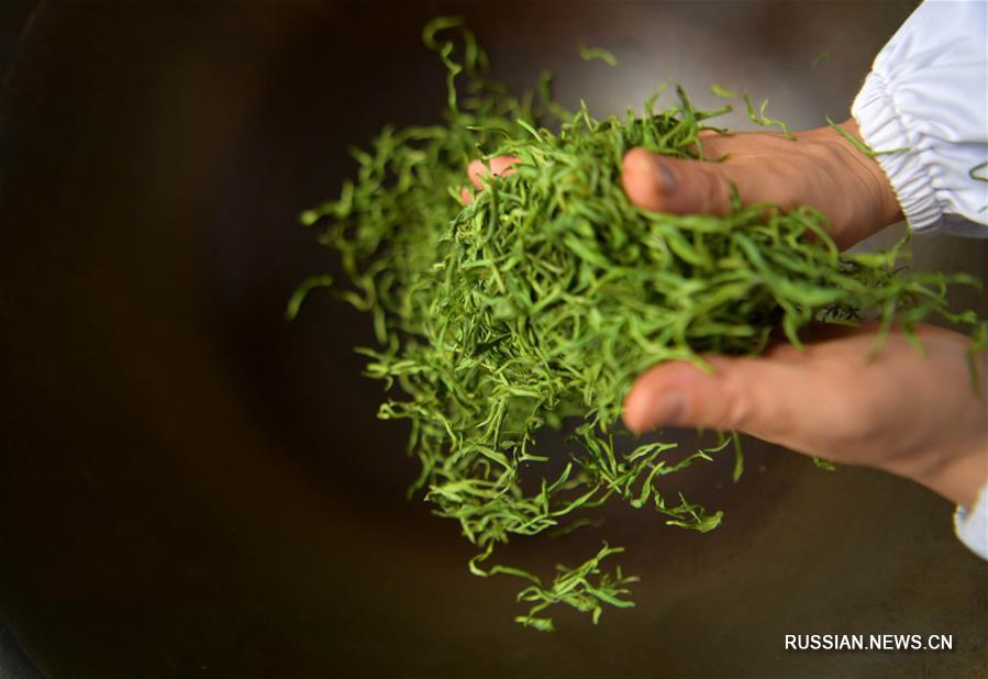 Благодаря благоприятным природным условиям уезд Бадун в Эньши-Туцзя-Мяоском автономном округе /провинция Хубэй, Центральный Китай/ имеет давнюю историю выращивания чая.