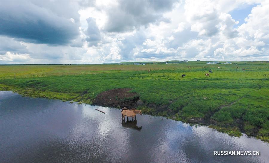 Величественные степные дали Хулун-Буира