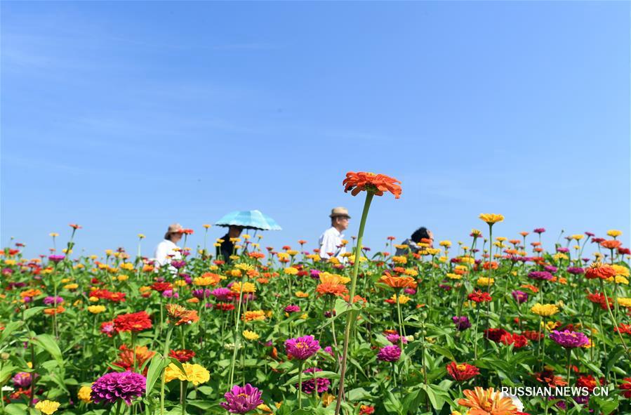 Море цветов в туристической зоне Ляньхуашань г. Чанчунь