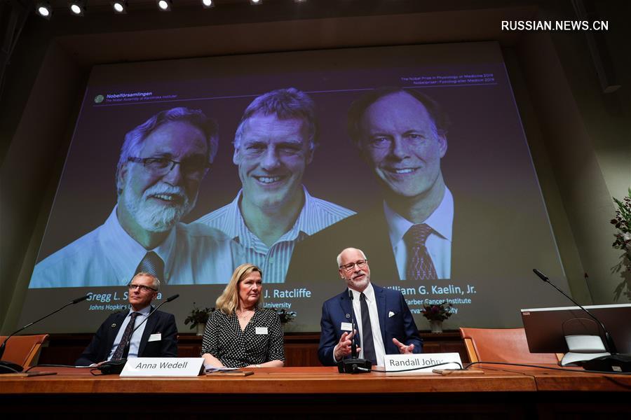 Нобелевская премия по физиологии и медицине присуждена за изучение механизма реакции клеток на кислород