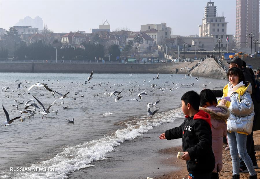 Гармония людей и птиц в зимнем Циндао