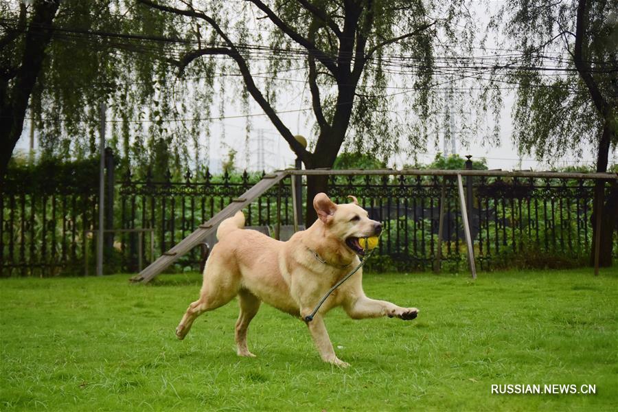 Полицейский пес Додо и его боевой товарищ