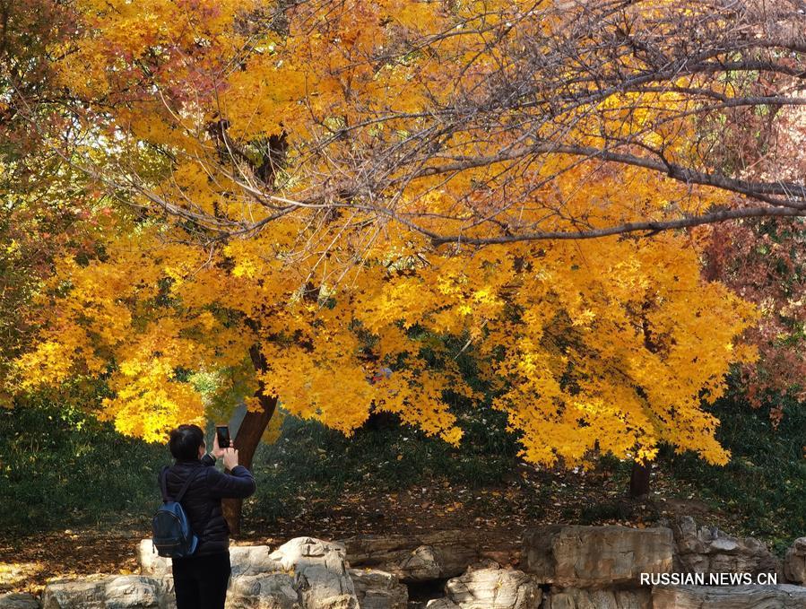 Чарующие осенние краски парка Юаньминъюань